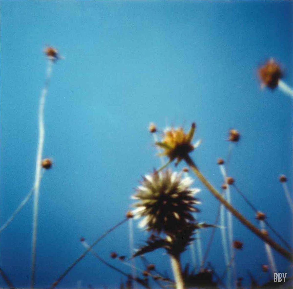 stenope, pinhole, slow photography, chambre noire, chardon, provence, thistle