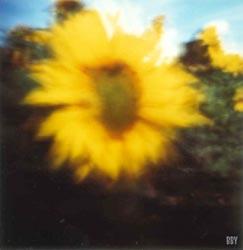 Tournesol, Neuville au bois, 1997, stenope, pinhole, slow photography, chambre noire, tounesol, sunflower