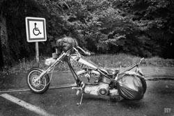 2015, batard, harley davison, moto, pluie, voyage, moto, vehicule