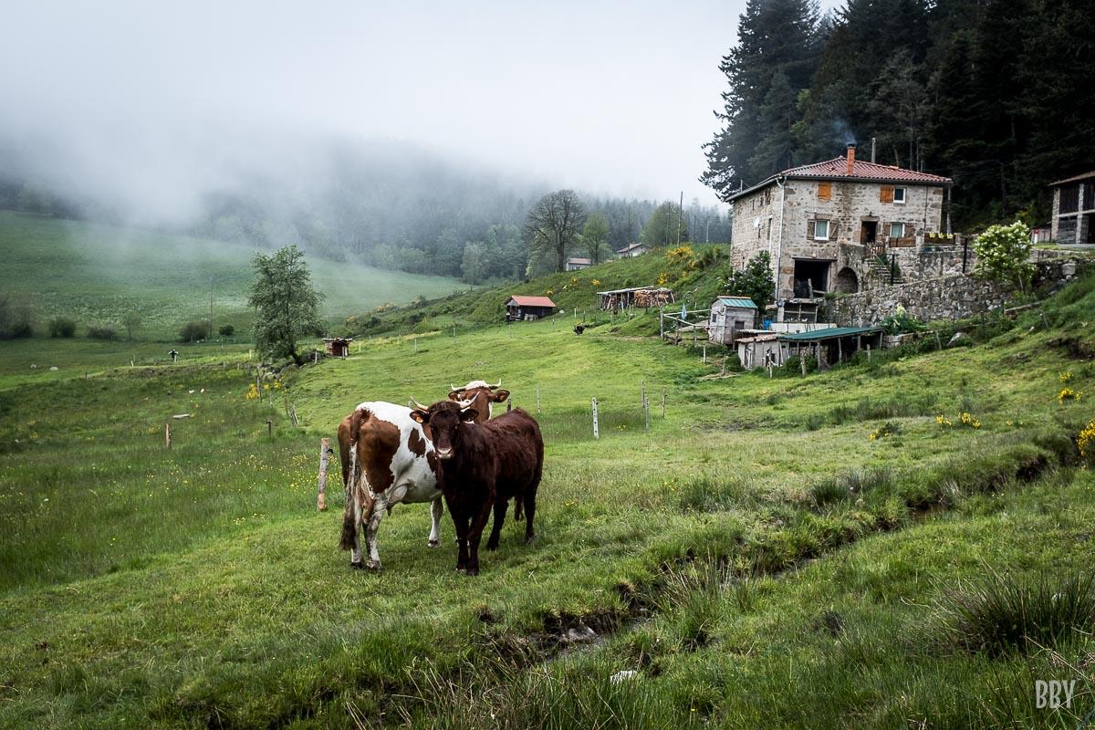 animaux, foret, fuit legume, vache