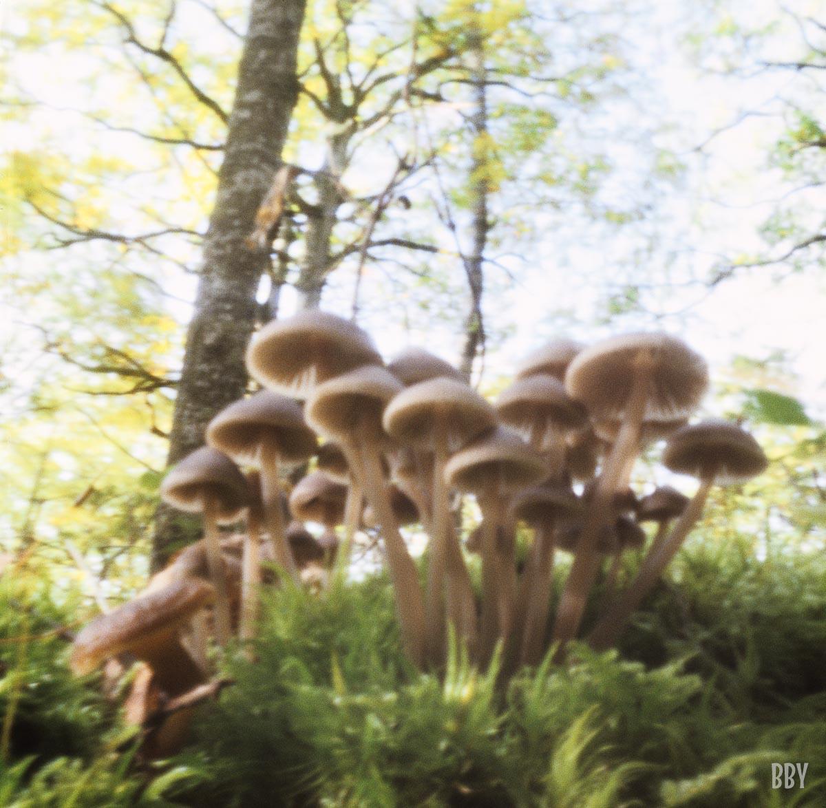 stenope, pinhole, slow photography, chambre noire, champignon, forêt, forest, mushroom