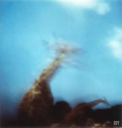 Girafe, La Barben, 1997, stenope, pinhole, slow photography, chambre noire, girafe, giraffe